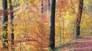 Dreh ab im Märchenwald