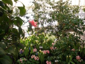 Ein Hauch von Frühling: Im Gewächshaus der MHK ist bereits bunte Blütenpracht zu bewundern. Foto: MHK