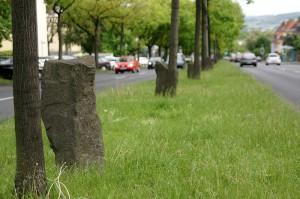 Beuys-Eichen in der Mitte der Ludwig-Mond-Straße. Foto: Mario Zgoll