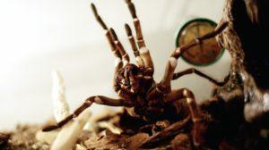 Hui Spinne! Faszinierende Achtbeiner im Naturkundemuseum