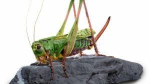 Insekten in XXL