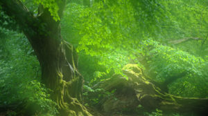Ausstellung zeigt den Zauber heimischer Wälder