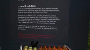 Sex und Evolution: Cocktailstunde im Naturkundemuseum