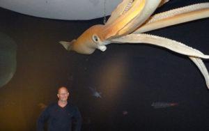 Geschaffen für die Finsternis: Dr. Kai Füldner, Direktor des Naturkundemuseums im Ottoneum, mit dem lebensechten Modell eines Tiefsee-Kalmars. Foto: Jan Hendrik Neumann